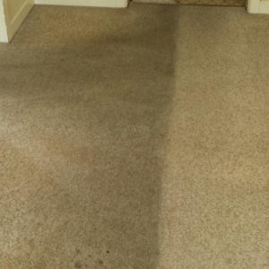 Before and after carpet cleaning Adelaide