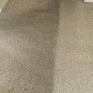 Before and after carpet cleaning Adelaide 2